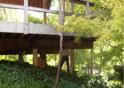 Botanic Japanese Garden
